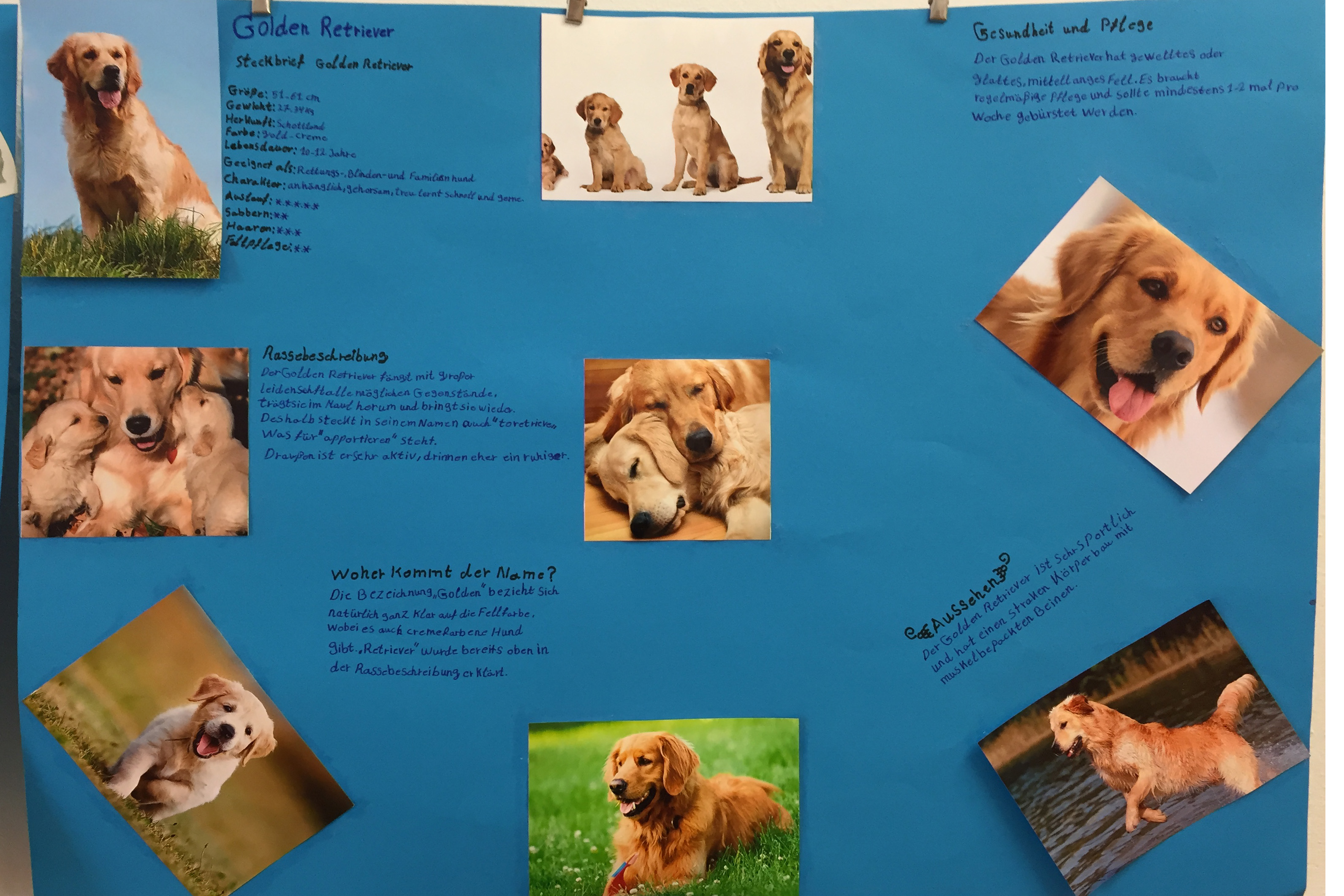 Steckbrief hund klasse 5